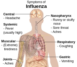 Flu symptoms diagram
