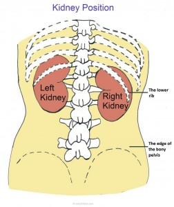 kidney pain location
