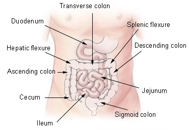 Splenic and hepatic flexure